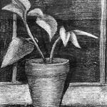 Window Plant 1